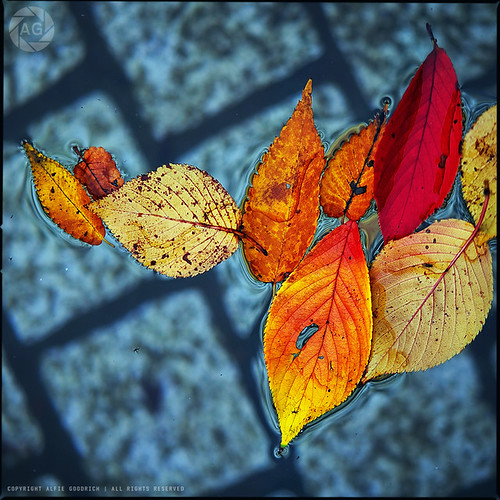 Autumn, squared | by Alfie | Japanorama