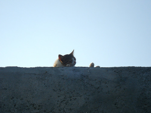 Crete - Heraklion - Harbour - Koules Fortress - Cat napping | by oniroi