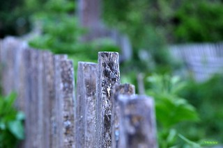 Fence - No Offence! | by ..Just V...