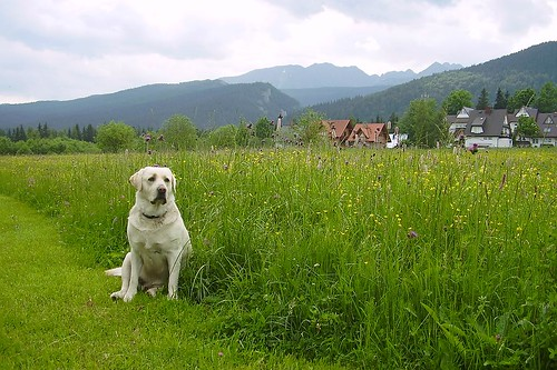 mountain dog ;) | by green_lover