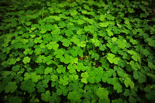 Clovers | by goingslowly