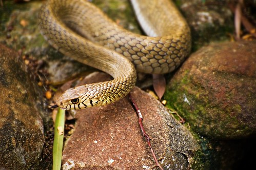 Snakes are cool!!! | by Vineet Radhakrishnan