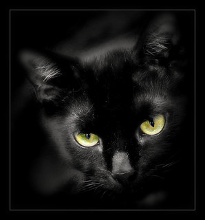 853 Black Cat 1 | by Nebojsa Mladjenovic