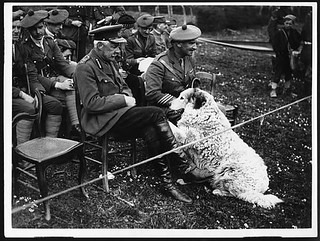 Divisional Commander with the divisional pet 'Rip' | by National Library of Scotland