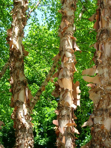 Bark | by Ann Althouse