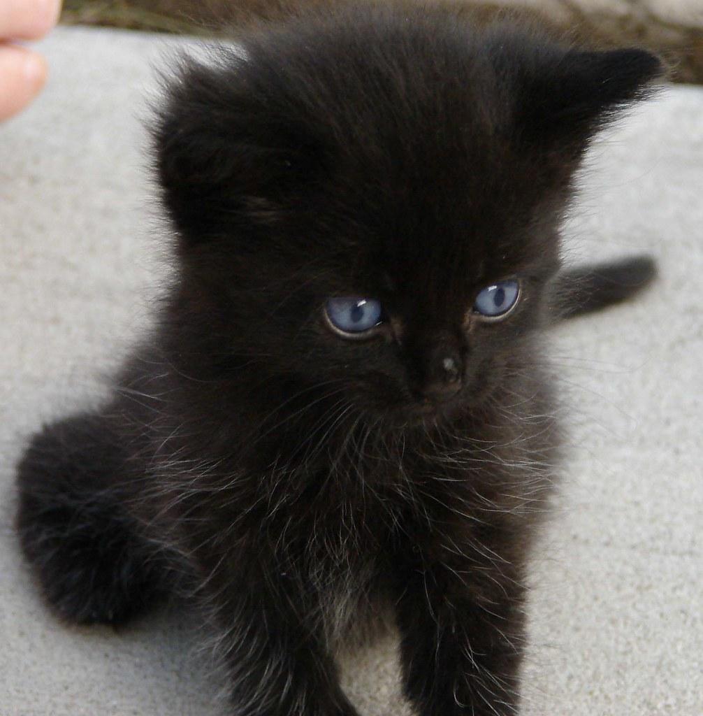 Black Kitten Weird Aunt Martha
