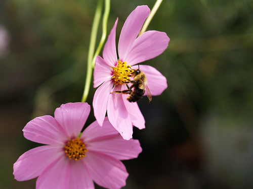 """the busy bee has no time for sorrows The following is a brief analysis of data collected on william blake trends  is a  spanish translation of """"the busy bee has no time for sorrow"""",."""