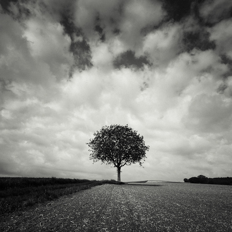 Image Gallery Single Tree