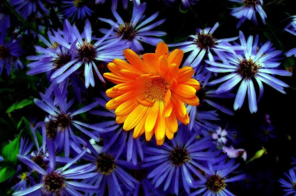 Some pretty flowers jim flickr some pretty flowers by quicksilver5001 some pretty flowers by quicksilver5001 mightylinksfo
