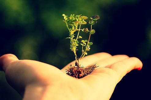 Plant a Seed for Earth Day | Earth Day, on April 22, is a da… | Flickr