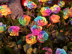 Tie-Dye Roses | by Mrs. Jenny Ryan