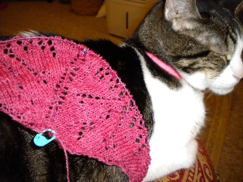 Whispering Pines Shawl (and Vinnie) | by jannabeth