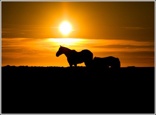 A horse with no name | by Trevi2009-