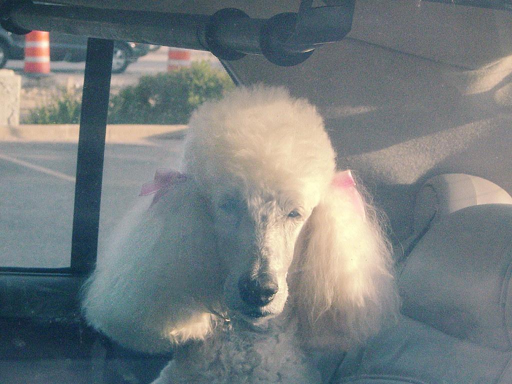 Brief Encounter With Platinum Blonde >> Brief Encounter With A Platinum Blonde Her Long Hair Fell Flickr