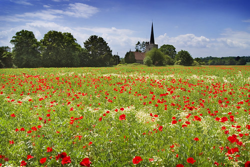 Poppy fields at St Margarets Church, Barming | by adrians_art