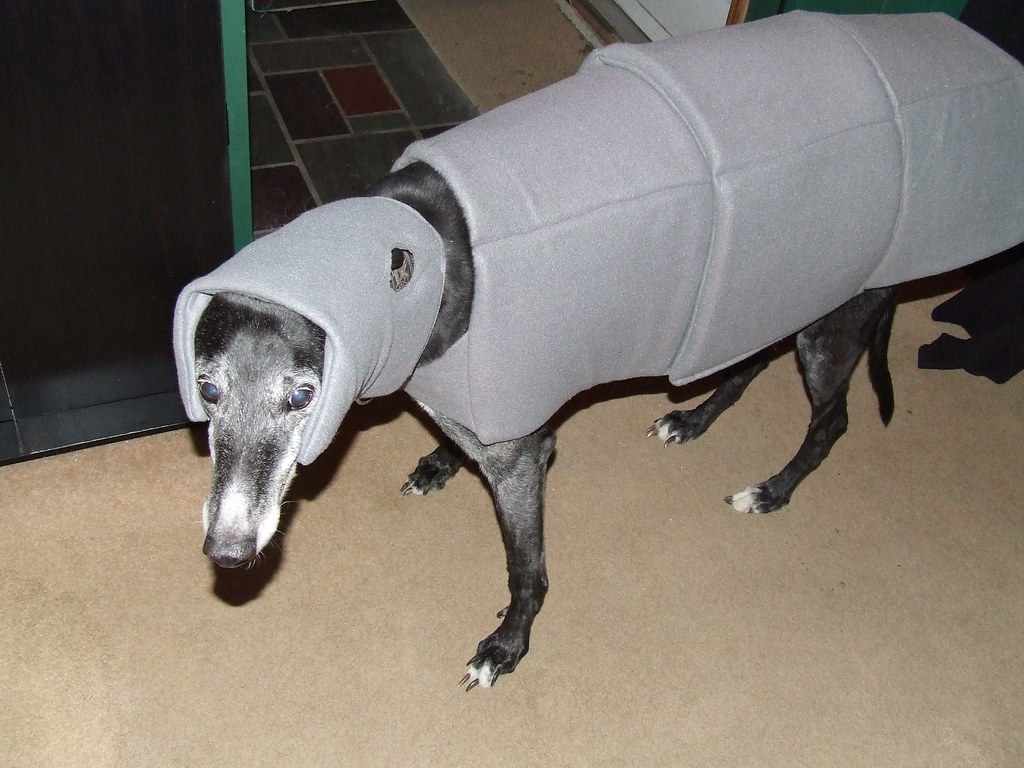 ... Imperial Walker (AT-AT) Dog Costume | by Gaidig & Imperial Walker (AT-AT) Dog Costume | Gaidig | Flickr