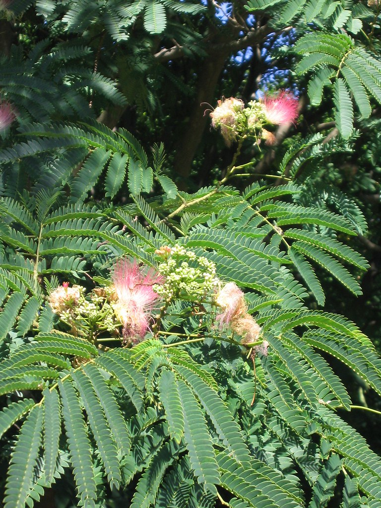 Fuzzy Pink Pom Pom Tree She Curmudgeon Flickr