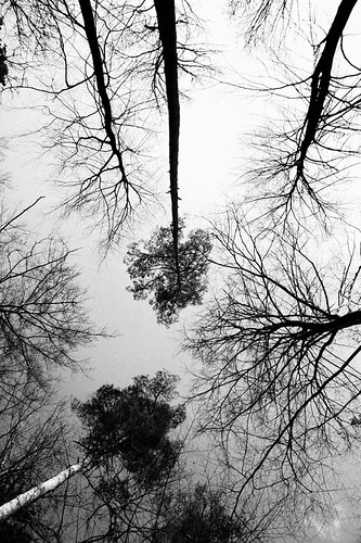 Trees 9424 | by cramero