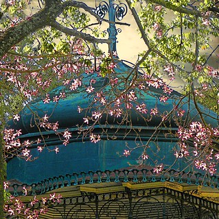 In the park still blooming tree | by Alda Cravo Al-Saude