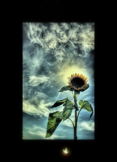 Sunflower | by I Must Be Dead