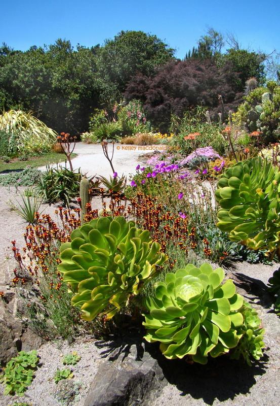 All Color At Mendocino Coast Botanical Gardens In Fort Bragg California Flickr