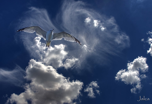 "Jonathan Livingston Seagull ""I am ready,"" he said at last.  And Jonathan Livingston Seagull rose with the two star-bright gulls to disappear into a perfect dark sky. 