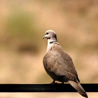 One Turtle Dove... | by pearl west