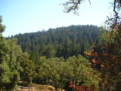 Gorman - Red Oak Trail