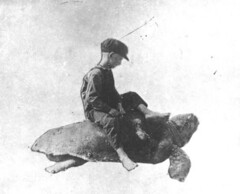 Thomas Brown on a Loggerhead turtle | by State Library and Archives of Florida