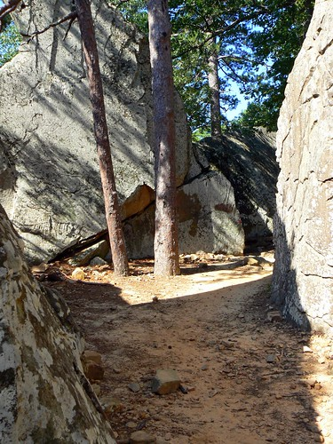 Robbers Cave Pines | by FreeWine