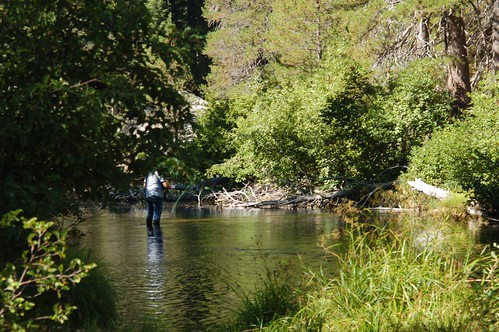 More of g man fly fishing branch of stanislaus river for Stanislaus river fishing