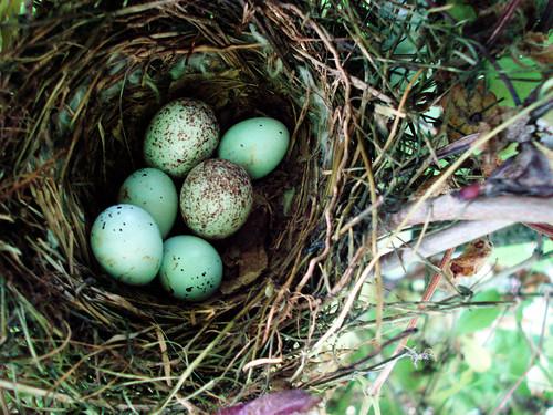 Nest Egg Blog Paint Colors