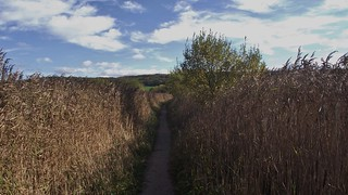 RSPB Leighton Moss, Lancashire, England - October 2010 | by SaffyH