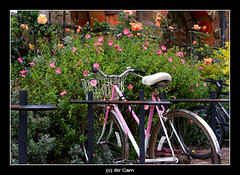 Cambridge bicycles: pink | by Sir Cam