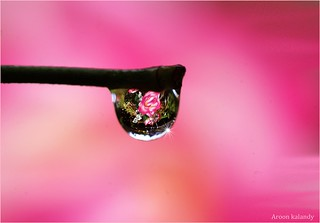 The world in a drop....Today is my son Rajat's Birthday. | by aroon_kalandy