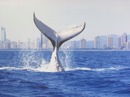 Whale watch, Gold Coast Australia | by NasiLemakLover-Jan