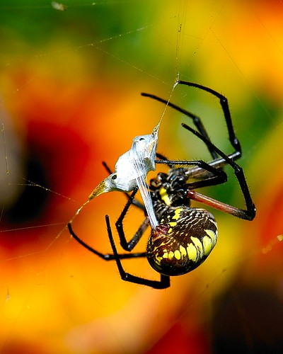 Web Generator | by Danny Perez Photography