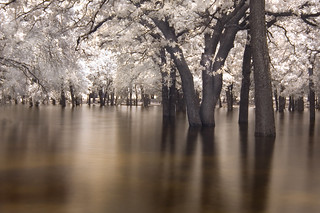 the drowning trees (infrared) | by mike.irwin