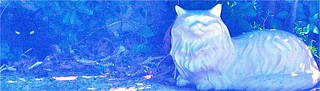 Two Surreal Kitties - Blue Sable and White Cheshire - Can You Find the Black Cat? | by Chic Bee