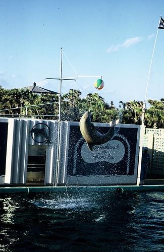 Dolphins - Mid Air Flip | Florida Trip 1972 Dolphins ...
