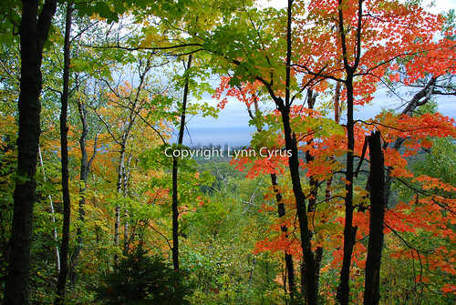 Fall 08 20 | by Lynn photographing the world