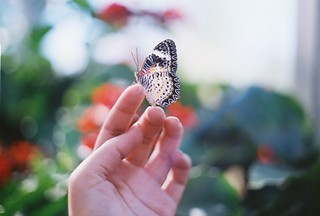 Butterfly Canvas | by Aubry Aragon