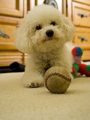I love my ball... | by Grace Courbis