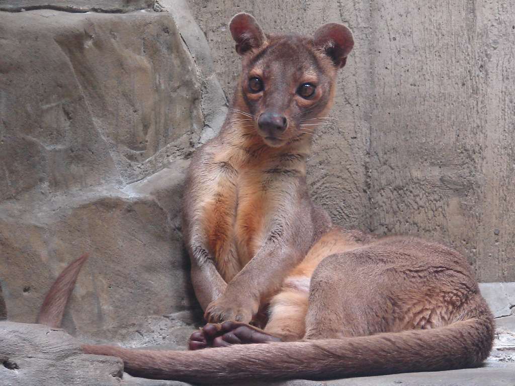 fossa christine tussing flickr
