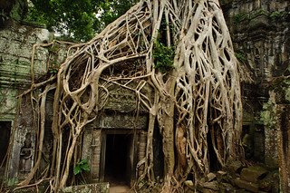 Ta Prohm Temple & Crazy Tree Roots | by goingslowly