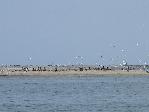 Birds ashore | by jeferonix