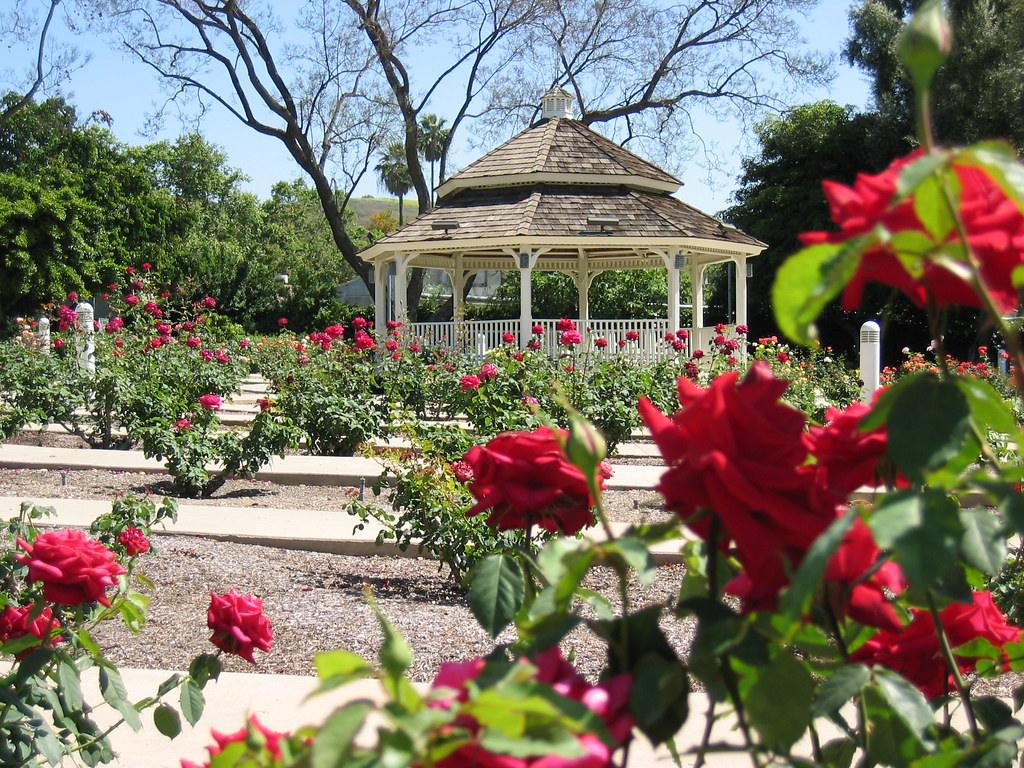 Rose Garden Cal Poly Pomona The Rose Garden At The Califo Flickr