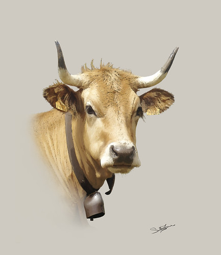 Brown Cow | by SallyT.
