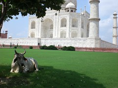 taj_mahal00023 | by deptfordjourneys