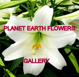 PLANET EARTH FLOWERS group gallery. Showcase galleries on display in PLANET EARTH NEWSLETTER. New Updates ck. them out. | by THATS RIGHT